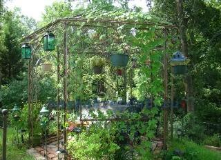 Какие вьющиеся растения для беседки выбрать?