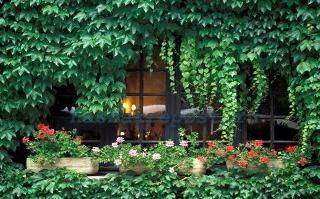 плетущиеся растения для сада