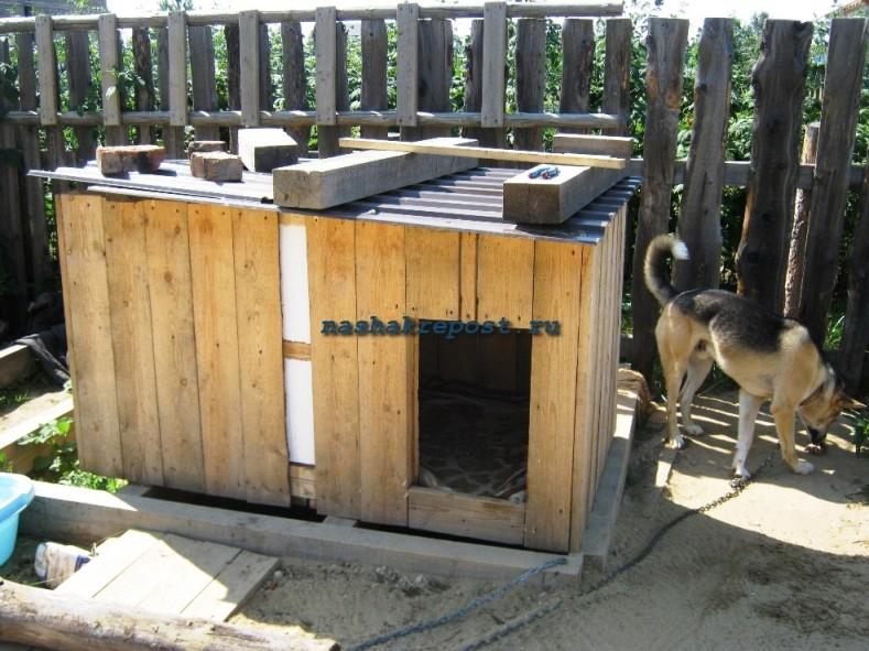 будкой для защиты собаки