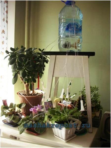Сделать полив для комнатных цветов своими руками