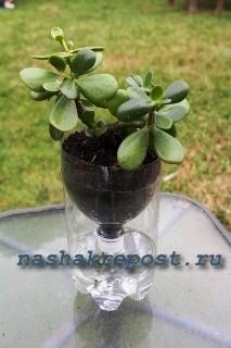 автоматический полив растения