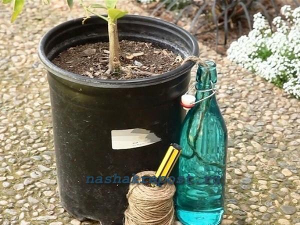 Автоматический полив цветов своими руками