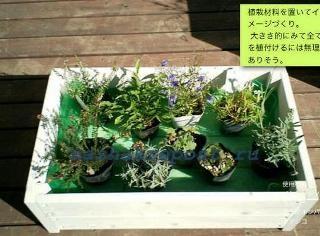 Расстановка растений