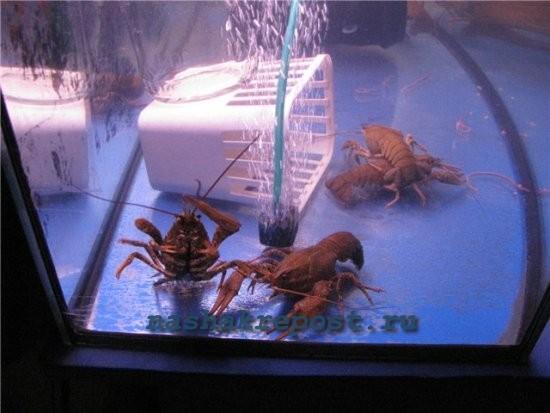 Из чего сделать аквариум для раков своими руками
