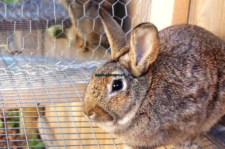 Как сделать клетку для кроликов