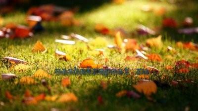 Когда косить газон осенью