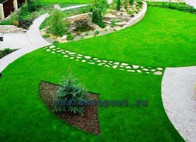 Красивый газон на участке